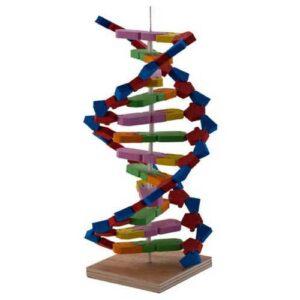 DNA MODELİ HeCe KIRTASİYE Merkez
